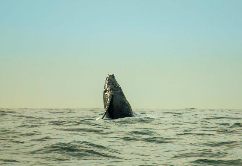Michele Roux | Ocean Image Bank