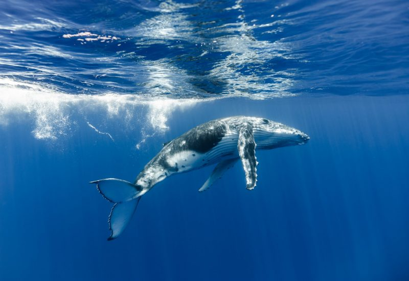 Ron Watkins | Ocean Image Bank