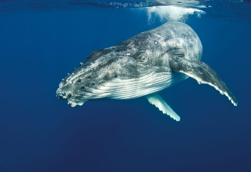 Whale © Jayne Jenkins